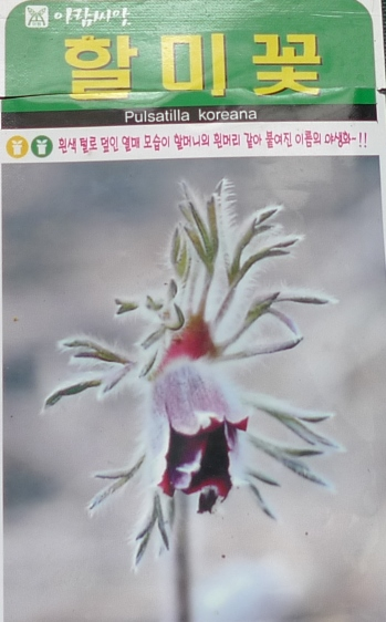 korean pulsatilla seed packet