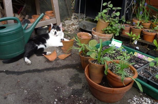 cat with seed trays