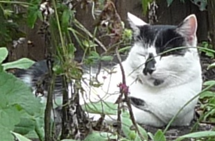 cat in flowerbed