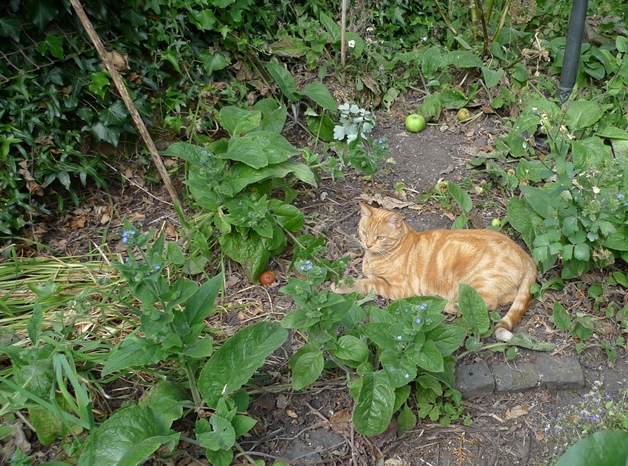 dry garden with ginger cat