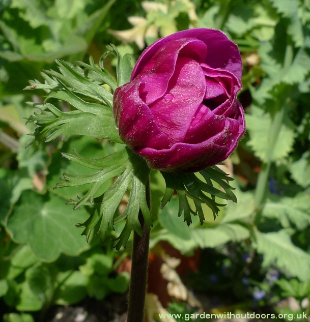 Plant Identification Garden Withoutdoors