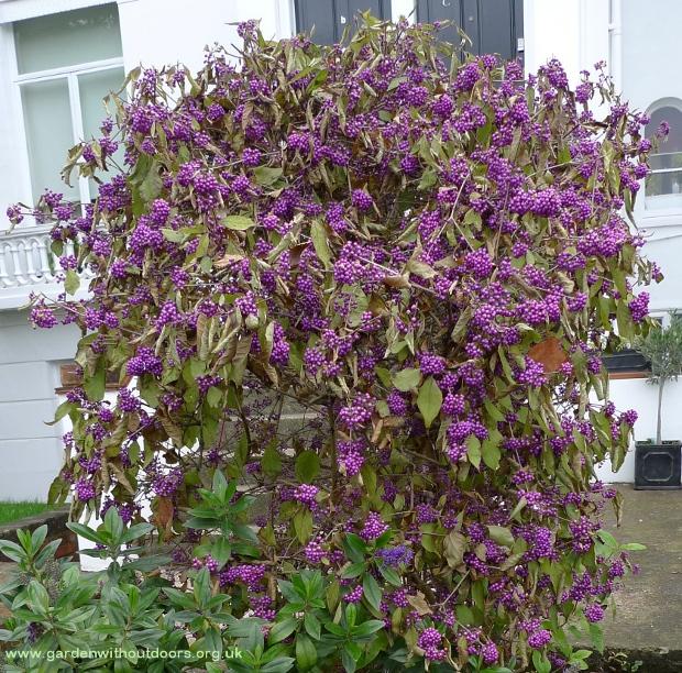 Plant Identification | garden withoutdoors