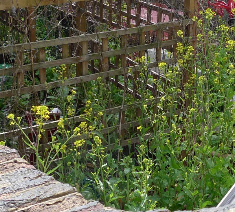 garden weed identification guide garden withoutdoors - 812×732