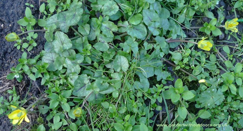 garden weed identification guide garden withoutdoors - 1000×541