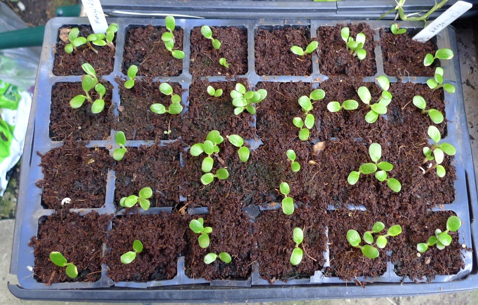 germinating seeds | garden withoutdoors