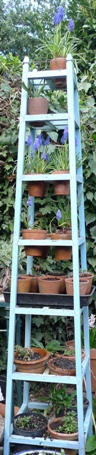 muscari on a plant stand