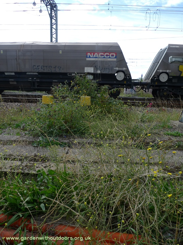 plants along the railway line
