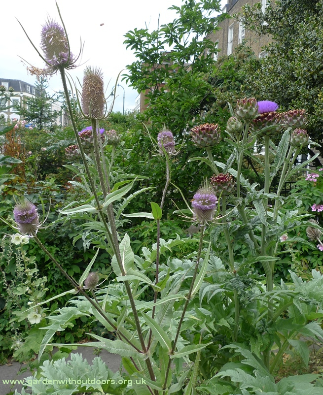 teasel and artichokes