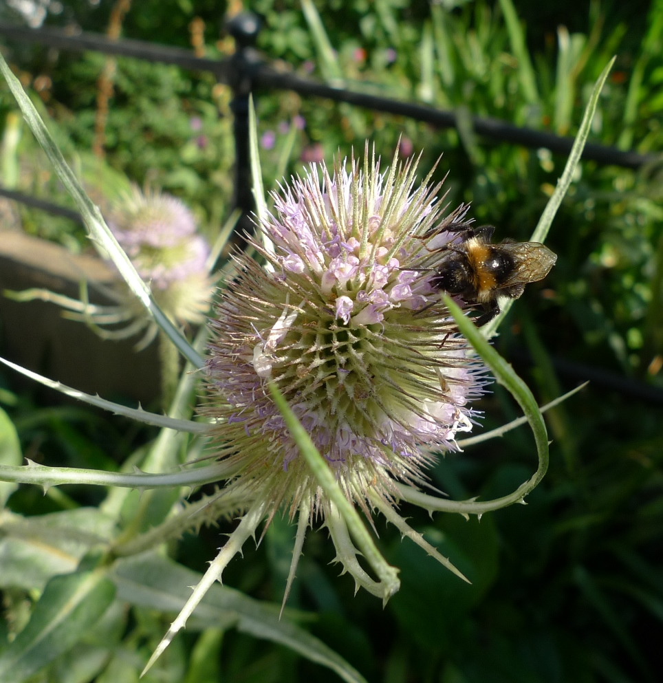 Amid Blazing Hot Sun The Bees Are Out Garden Withoutdoors