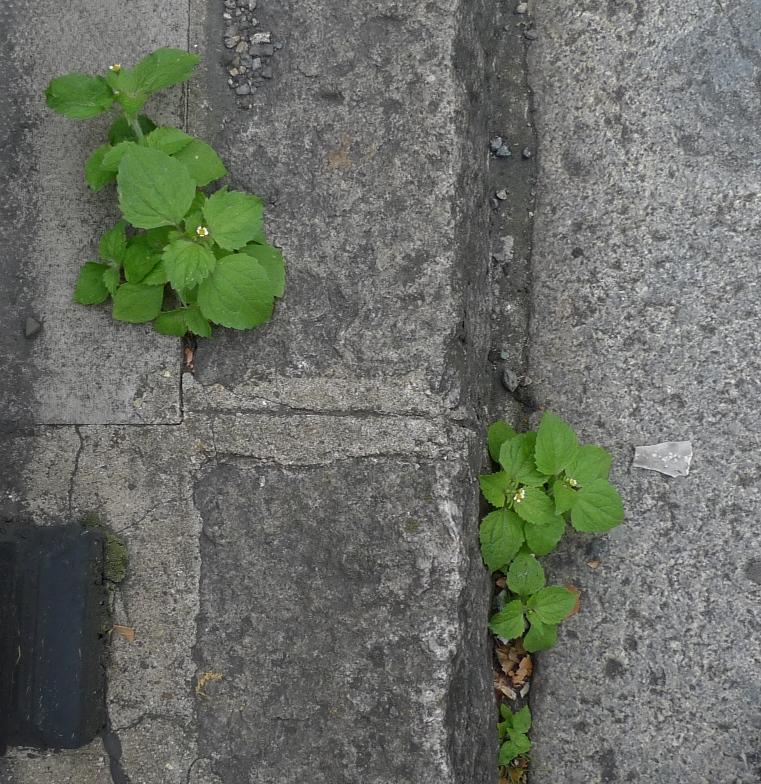 garden weed identification guide garden withoutdoors - 761×784