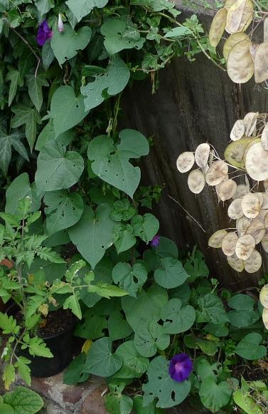 Garden weed identification guide garden withoutdoors mightylinksfo