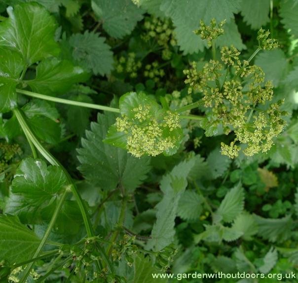 Garden Weed Identification Guide Garden Withoutdoors