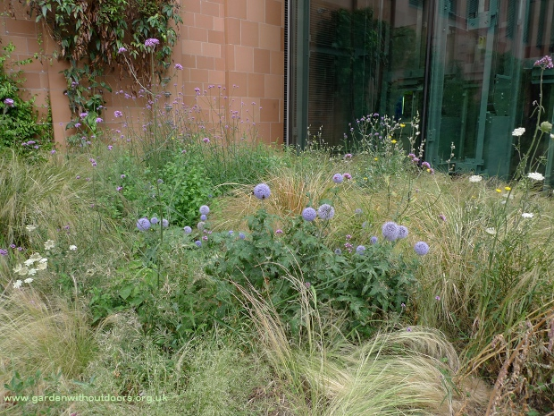 Crick Institute wildflower garden