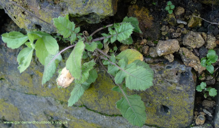 weeds growing in wall